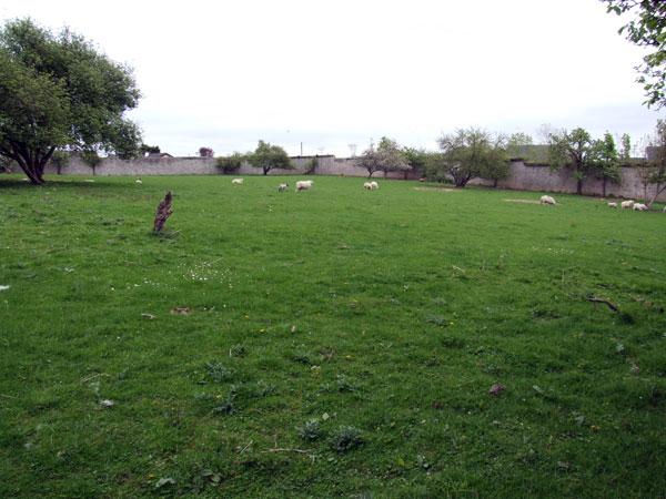 Ballykealey walled garden.